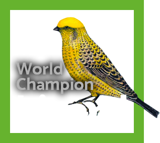 World Champion Lizard